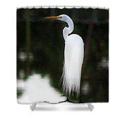 Snowy Showy Egret Shower Curtain