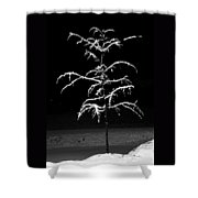 Snowy Sophistication - An Elegant Fledgling Shower Curtain