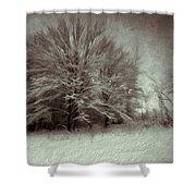 Snowy Treasure Shower Curtain