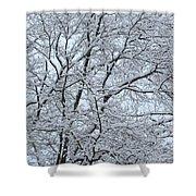 Snowy Tree Limb Maze Shower Curtain