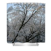 Snowcovered Trees Shower Curtain