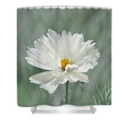 Snowy White Cosmos Shower Curtain