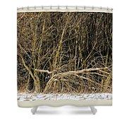 Snowy Winter Forest Shower Curtain