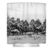 Snowy Winter Pine Trees In Black And White Shower Curtain
