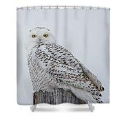 Snowy Wisdom Shower Curtain