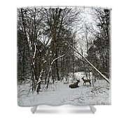 Snowy Wooded Path Shower Curtain