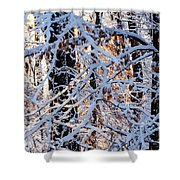 Snowy Woods Shower Curtain