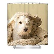 Snuggle Dog Shower Curtain