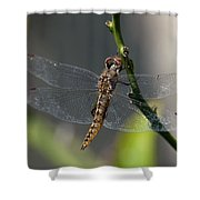 Soaking Rays Shower Curtain