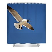 Soaring Above The Sea Shower Curtain