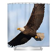 Soaring American Bald Eagle Shower Curtain