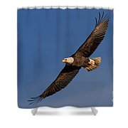 Soaring Bald Eagle Shower Curtain