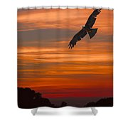 Soaring Bird Of Prey Shower Curtain