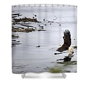 Soaring Eagle Shower Curtain