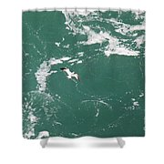 Soaring Over The Falls Waters Too Shower Curtain