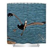 Soaring Pelican Shower Curtain