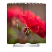 Soaring Red Rosebud Shower Curtain