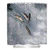 Sockeye Salmon Oncorhynchus Nerka Shower Curtain