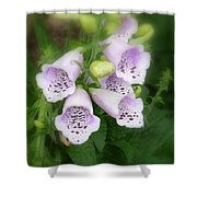 Soft And Silky Laced Gloves Shower Curtain