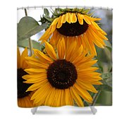 Soft Colors Sunflowers Shower Curtain