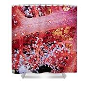 Soft Corals 2 Shower Curtain