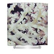Soft Corals 36 Shower Curtain