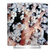 Soft Corals 6 Shower Curtain