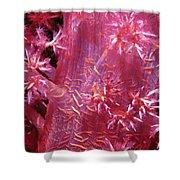 Soft Corals 8 Shower Curtain