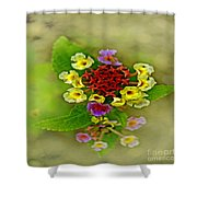 Soft Floral Duvet Cover Shower Curtain