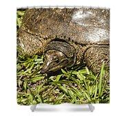 Florida Soft Shelled Turtle - Apalone Ferox Shower Curtain