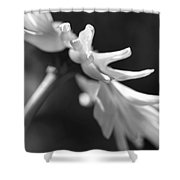 Soft Focus Daisy Flower Monochrome Shower Curtain