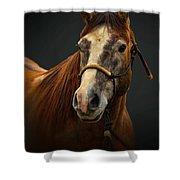 Soft Focus Horse Shower Curtain