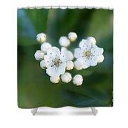 Soft Hawthorn Shower Curtain