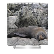 Soft Life Seal Shower Curtain
