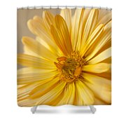 Soft Marigold Shower Curtain by Anne Gilbert