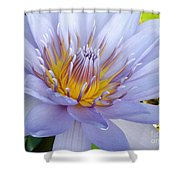 Soft Mauve Waterlily Shower Curtain