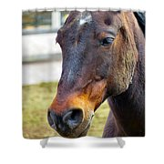Soft Nose Shower Curtain