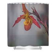 Soft One Style Shower Curtain
