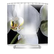 Soft Orchid Shower Curtain