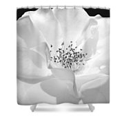 Soft Petal Rose In Black And White Shower Curtain