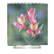 Soft Pink Alstroemeria Flower Shower Curtain