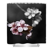 Soft Pink Blossom Shower Curtain