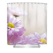 Soft Pink Daisies Shower Curtain