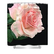 Soft Pink Rose 1 Shower Curtain