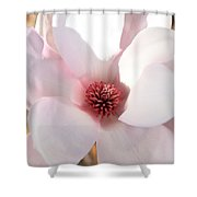 Soft Pink Saucer Magnolia Shower Curtain