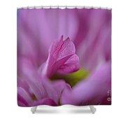 Soft Purple Shower Curtain