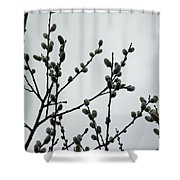 Soft Pussy Willows - Hard Gray Sky Shower Curtain
