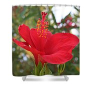 Soft Red Hibiscus With A Natural Garden Background Shower Curtain