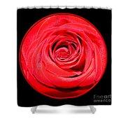 Soft Red Rose Closeup Shower Curtain