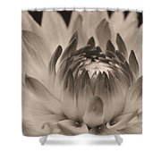 Soft Sepia Shower Curtain